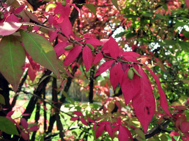 Herbsteröffnung