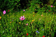 Wildflowers - Photo of Aigueperse