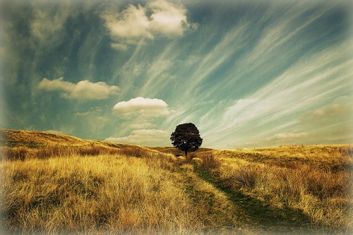 trees england sky sunlight grass clouds canon skyscape landscape path horizon lancashire fields ogden treeoflife rochdale newhey cannon600d