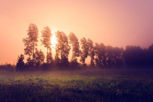 autumn sunrise landscape nikon foggy d800 sigma1224mmii