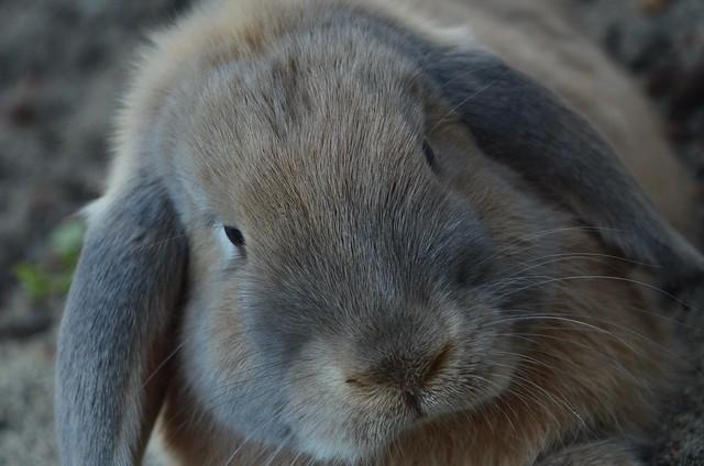 Spencer the Rabbit