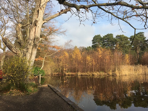 Pond near the start