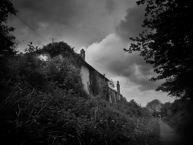 ivy-walls