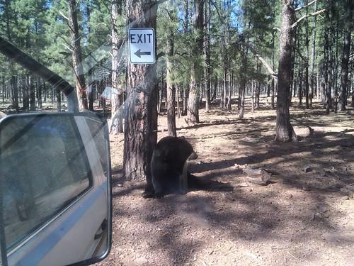 Bear leads us out of Bearizona