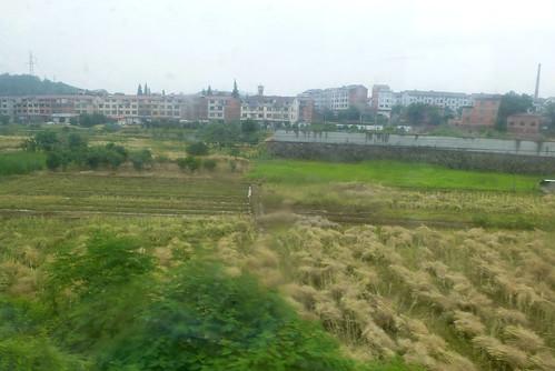 Zhejiang-Yushan-Wenzhou-train (13)