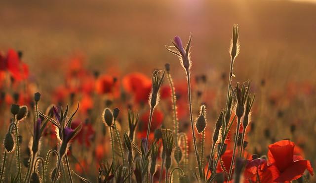 flowermeadow30