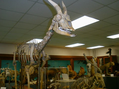 Did you know Wayne State's Department of Biological Sciences has its own Museum of Natural History?