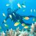 Chole Bay Diving