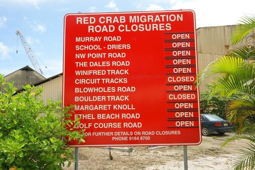 聖誕仿地蟹生殖遷徙時,聖誕島國家公園管理處會公告那些路段是開放或是封閉的。(攝影:施習德)