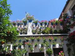 Cordoba, Spain: Patio Festival, part 18