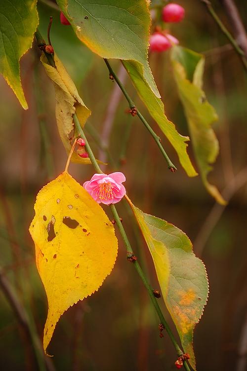 _autumn-spring_1_