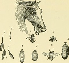"""Image from page 545 of """"The standard horse book, comprising the taming, controlling and education of unbroken and vicious horses"""" (1895)"""