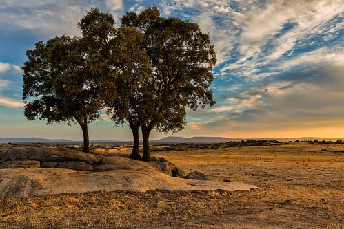 españa naturaleza color horizontal atardecer arboles natural paisaje verano campo nublado seco rocas dehesa nadie extremadura arido airelibre granito parquenatural sereno losbarruecos luzlateral malpartidadecaceres eduardoestellez estellez