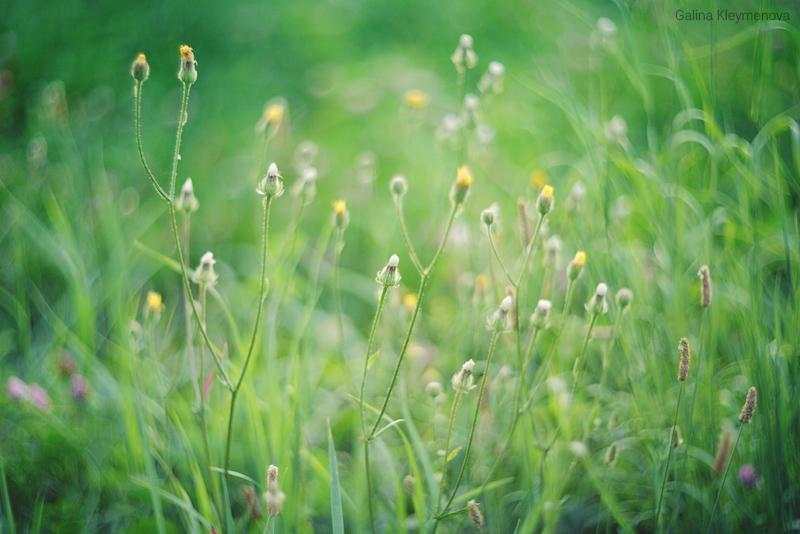 Травинки