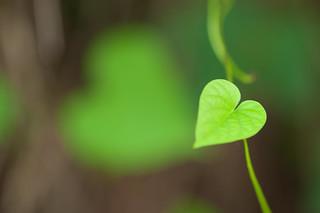 Spread Love! per Vinoth Chandar a Flickr