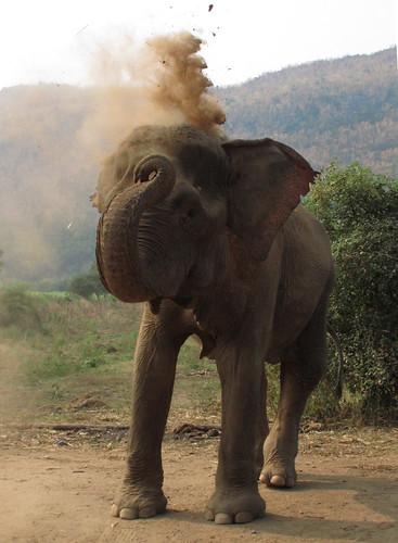 Elephant's World