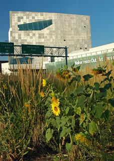 Sunflowers, Walker Art Center