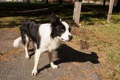 Doubtful Dog
