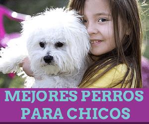 mejores perros de raza para niños