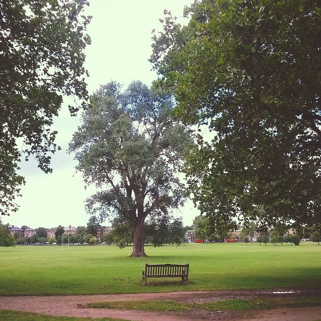 A park bench in Peckham Rye