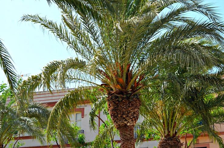 DSC_2718 Ibiza palmtree