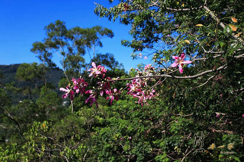 天空步道|莫那魯道巨人像|賽德克故事館|滴水觀音|泰雅渡假村|南投私房景點
