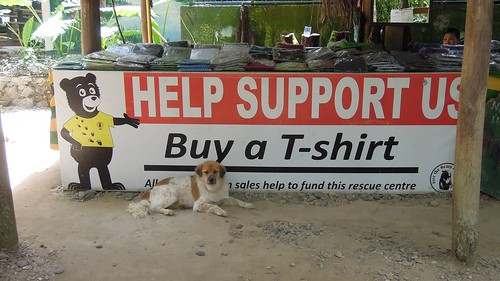 bear park rescue dog sign waterfall nikon outdoor centre laos province luangprabang 2014 kuangsi p300