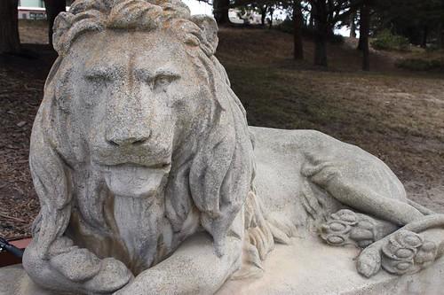 San Francisco Lion 2014