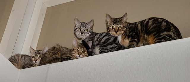 Kittens of Colony B