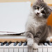Kitten Piano by ChrisJohansonPhotos