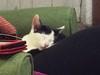 Frank a dormir com língua de fora