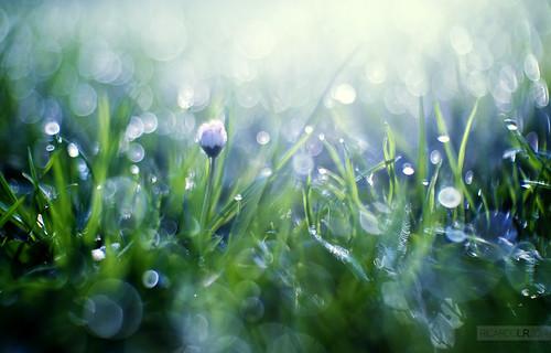 blue london grass sunrise 35mm dawn frozen bokeh olympus cctv days dew 17 365 fujian 3517 365project olympusuk epm2 3652014 olympusiberia