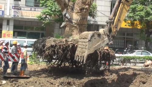 樹木的命運不同,遭遇也有如天壤之別