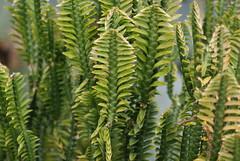 arecales(0.0), shrub(0.0), flower(0.0), branch(0.0), tree(0.0), ostrich fern(0.0), ferns and horsetails(0.0), spruce(0.0), vascular plant(1.0), leaf(1.0), plant(1.0), flora(1.0), plant stem(1.0), vegetation(1.0),