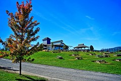 Barrel Oak is part of Fauquier Wine Trail in Delaplane, VA which includes plenty of boutique wineries near I-66 with beautiful country side views. Very popular winery with awesome views of the hills and the vineyards. Very welcoming grounds with plenty of