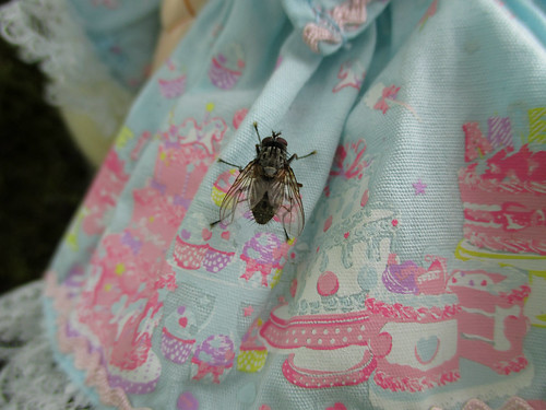 A fly on Lucia's dress