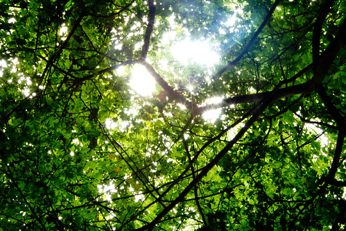 through the green ceiling