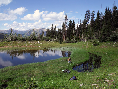 Plant data is collected from a fen that sits at 11,000 feet near Mount Emmons on the Gunnison National Forest in Colorado. (U.S. Forest Service)
