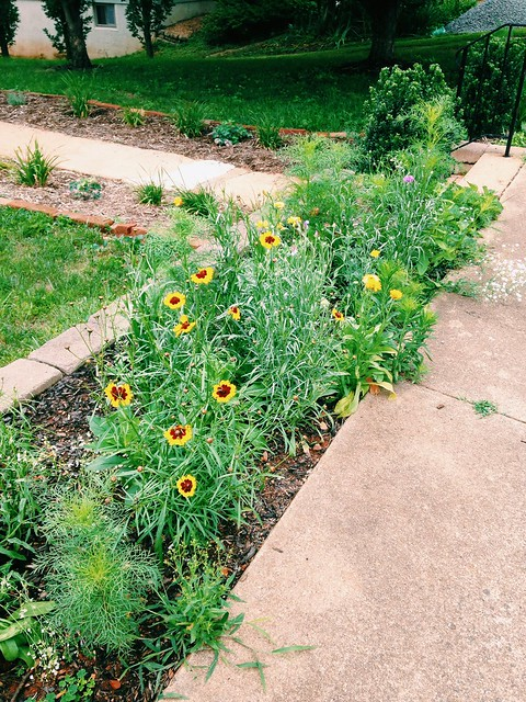 Wildflower bed growth