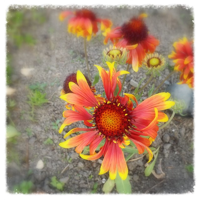 Beautiful!, Fujifilm FinePix S3380