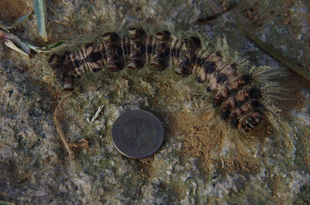 登山路上的昆蟲