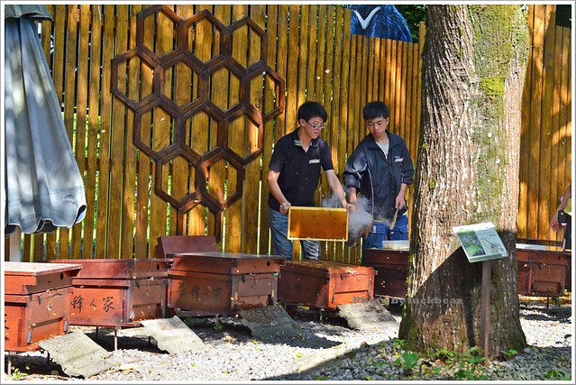 養蜂人家蜂采館008-DSC_6039