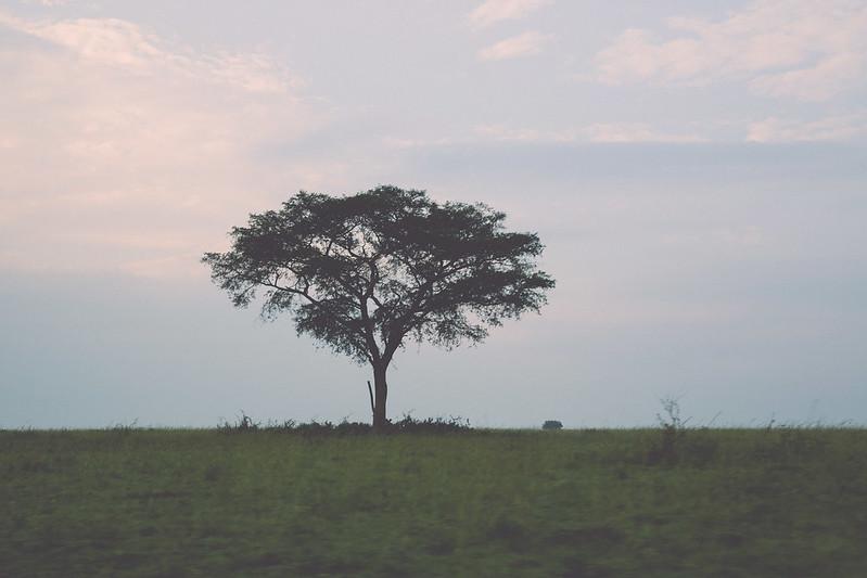 africansafari2014-22