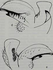 "Image from page 68 of ""Tijdschrift voor entomologie"" (1857)"