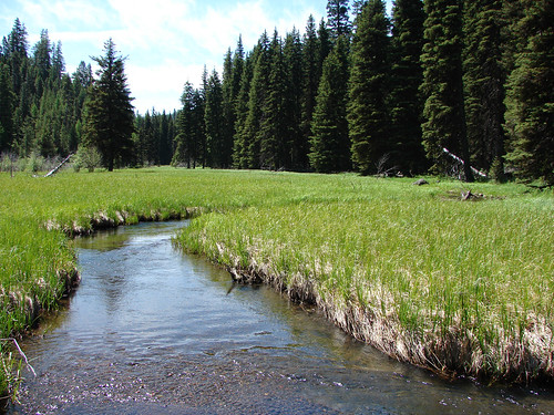 The land surrounding the John Day River headwaters is home to endangered bull trout, as well as redband rainbow trout. Elk, deer, black bear, pronghorn, mountain goats, grouse and quail also make their home there. (U.S. Forest Service/Ken Sandusky)