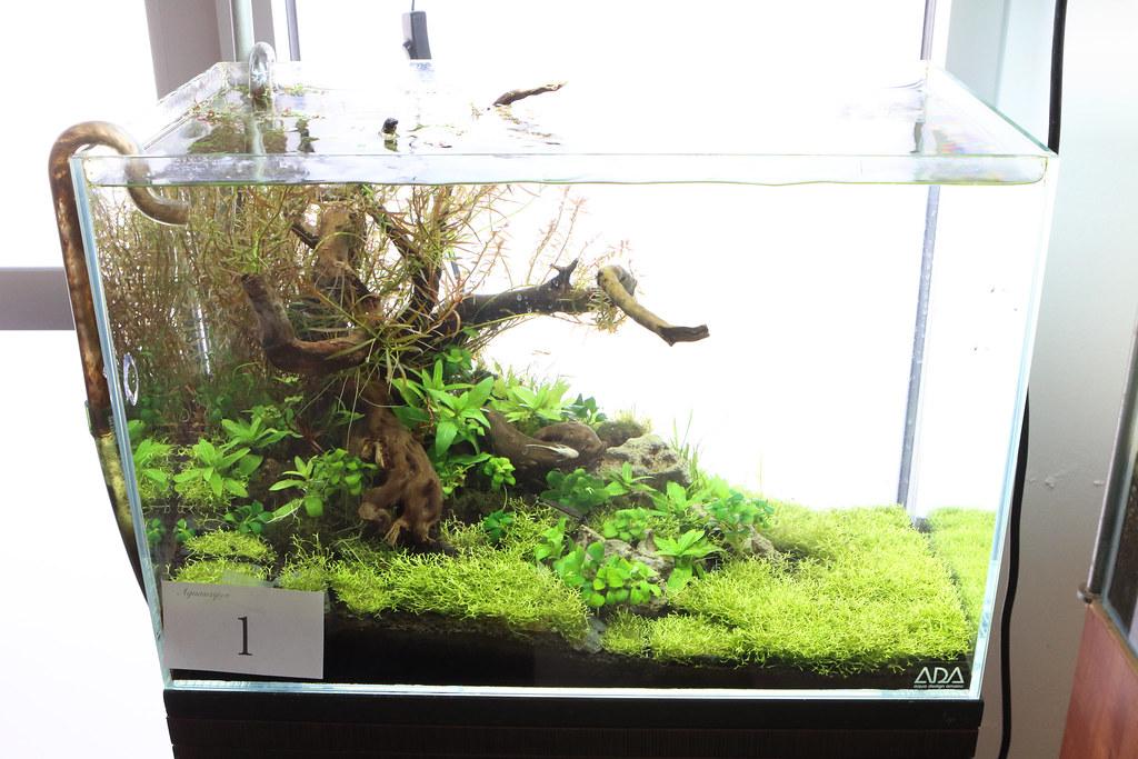 Aquascape Contest 2014 The Planted Tank Forum