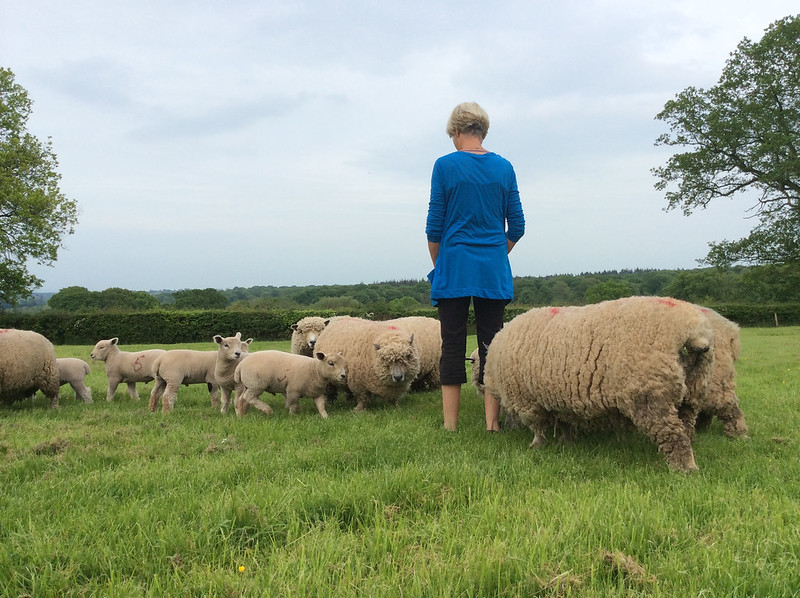 Gill and the Sheep