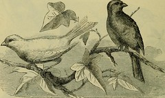 """Image from page 511 of """"Reptiles and birds : a popular account of their various orders, with a description of the habits and economy of the most interesting"""" (1883)"""