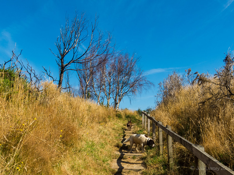Heading up the steps to Ham Common