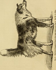 "Image from page 62 of ""The expression of the emotions in man and animals"" (1872)"